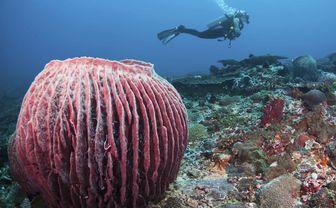 Diver in Bali, Indonesia