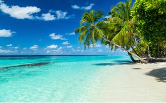 Palm Tree on Maldives Beach