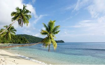 Fiji beach with palm trees