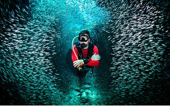Diver with school of fish