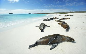Seals lying on beach