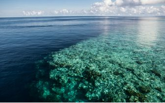 Coral Reef Drop Off, Wakatobi