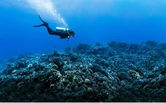 Scuba Diver over reef