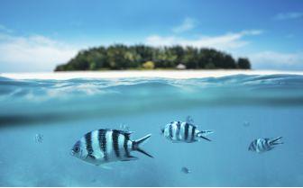 Tanzania Underwater