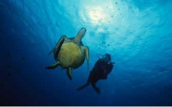 Turtle and Diver, Kauai