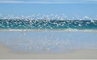 Birds on the Beach, Western Australia