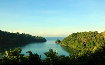 Lembeh Forests