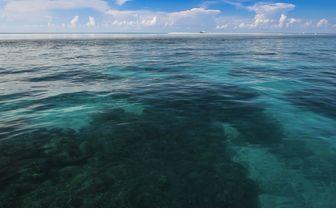 Reef Seascape, Philippines