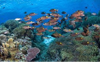 Fish swimming at Tubbataha Reef
