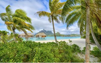 Bora Bora Palm Trees in the Wind