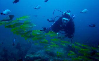 Diver in Sabang