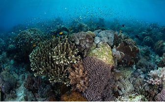 coral reef Alor
