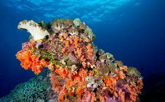 Tulamben coral, Bali