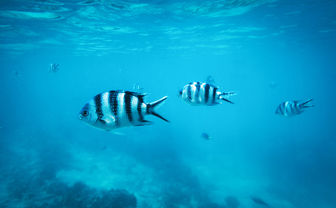 Tropical fish, Zanzibar
