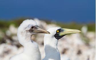 sea birds Seychelles