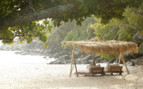 Picture of the beach beds on a North Island beach