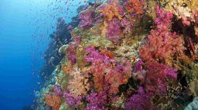 Colourful Coral, Fiji