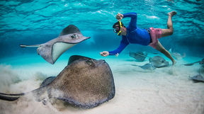 Snorkelling with stingrays in the Cayman Islands