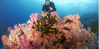 Soft Coral, Namena Marine reserve