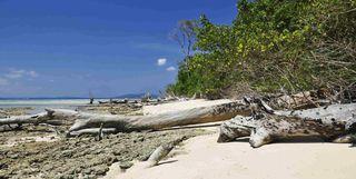 Log on Beach, Andaman Islands