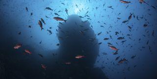 Fish swimming underwater, Peninsula Papagayo