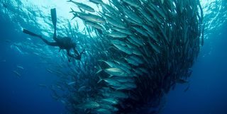 shoal of fish scuba diving