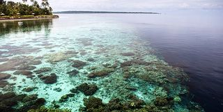 Wakatobi house reef, Indonesia