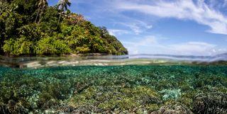 Raja Ampat coral