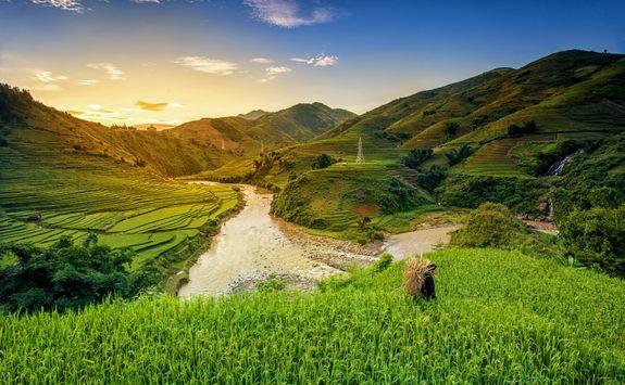 Rice paddies Ubud Bali