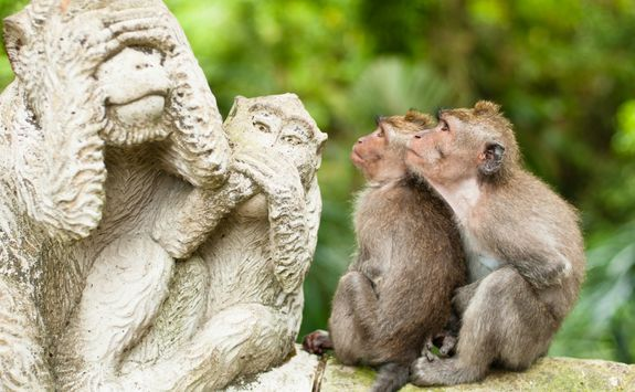 Sightseeing monkeys Bali