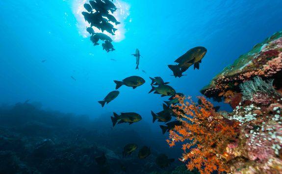 scuba diving travel komodo