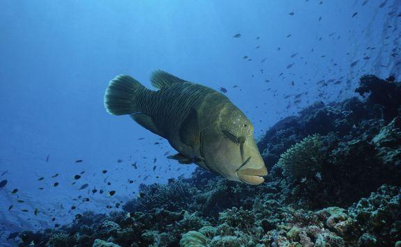 marine life maldives