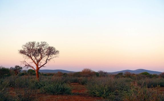 Madikwe sunrise game drive