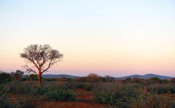 Madikwe sunrise game drive
