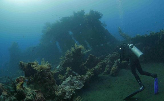 Diver at Liberty Wreck