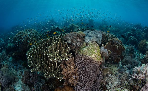 coral reef diving indonesia