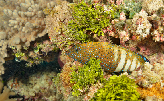 fish diving pemba channel
