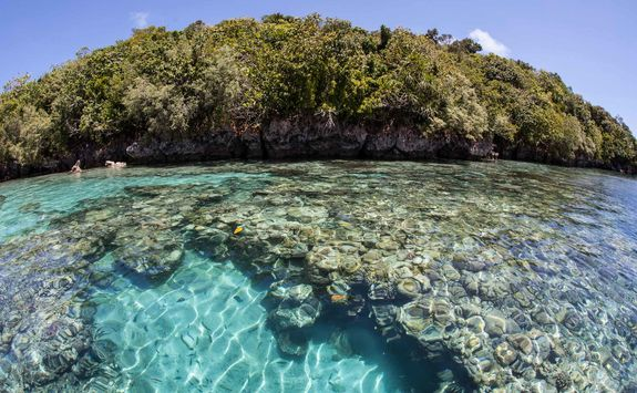 limestone island reef