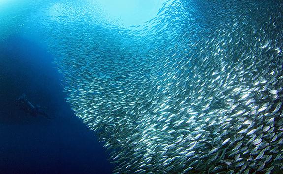 moalboal diving
