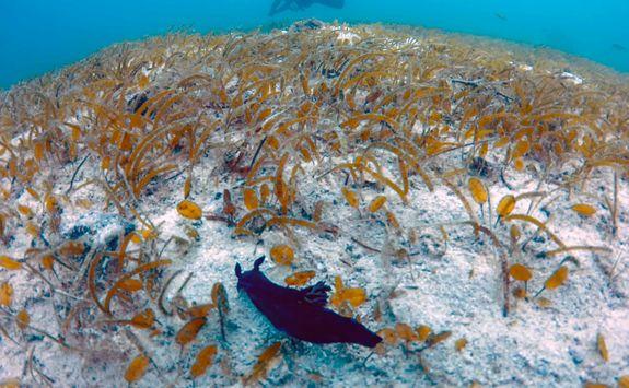sea slug movong