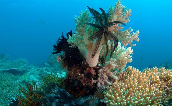 coral garden apoisland