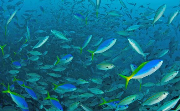 shoal fish beqa lagoon