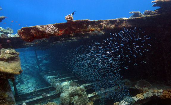 Giannis D fish