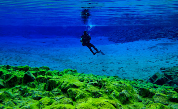 silfra diving algae
