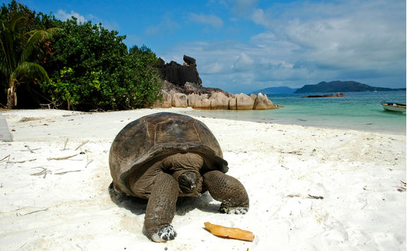 giant tortoise on beach seychelles
