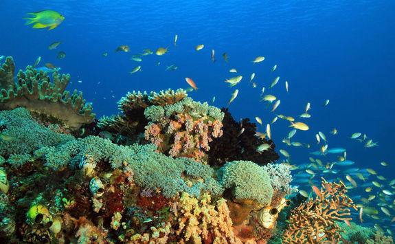 Coral reef, Raja Ampat