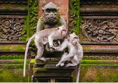 Monkeys Temple Ubud