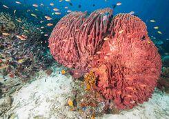Moyo Island coral