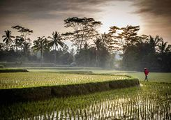 Sunrise over the rice paddies