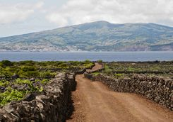 Vineyard on Pico Island
